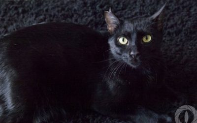 Nombre: Blacky